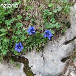 5-enzian-auf-der-Kampenwand-Chiemgau-Klettern