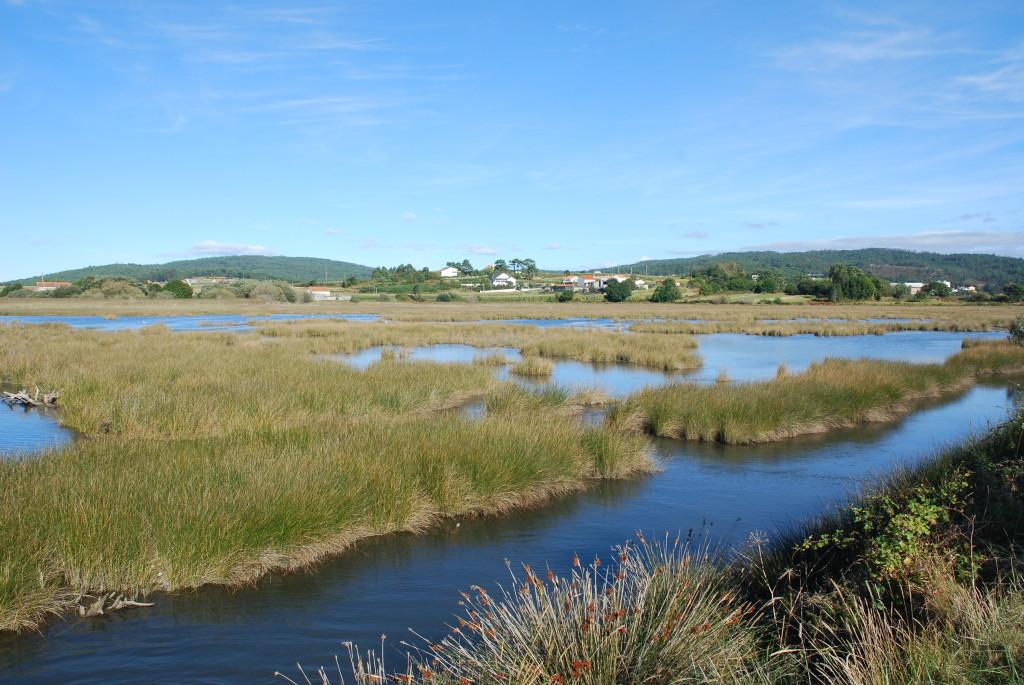 Schwemmland des Anllóns - Galicien