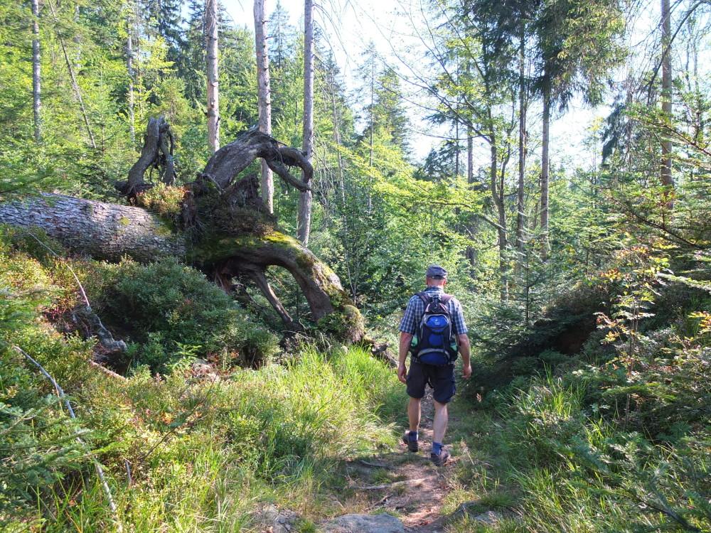 Nationalpark Deutschland Bayerischer Wald
