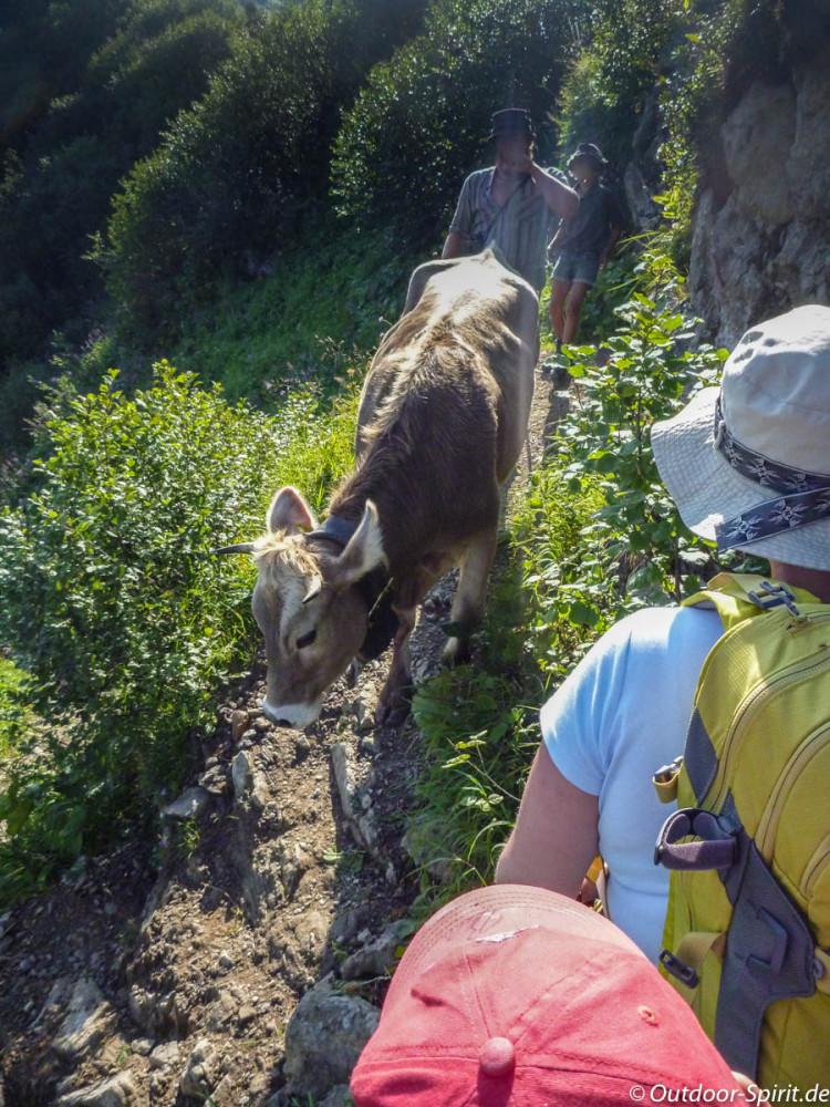 Ein Rindvieh büxt aus (Foto: Rene Saathoff)