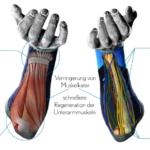 kletterarme-kompression-vertics-sleeves