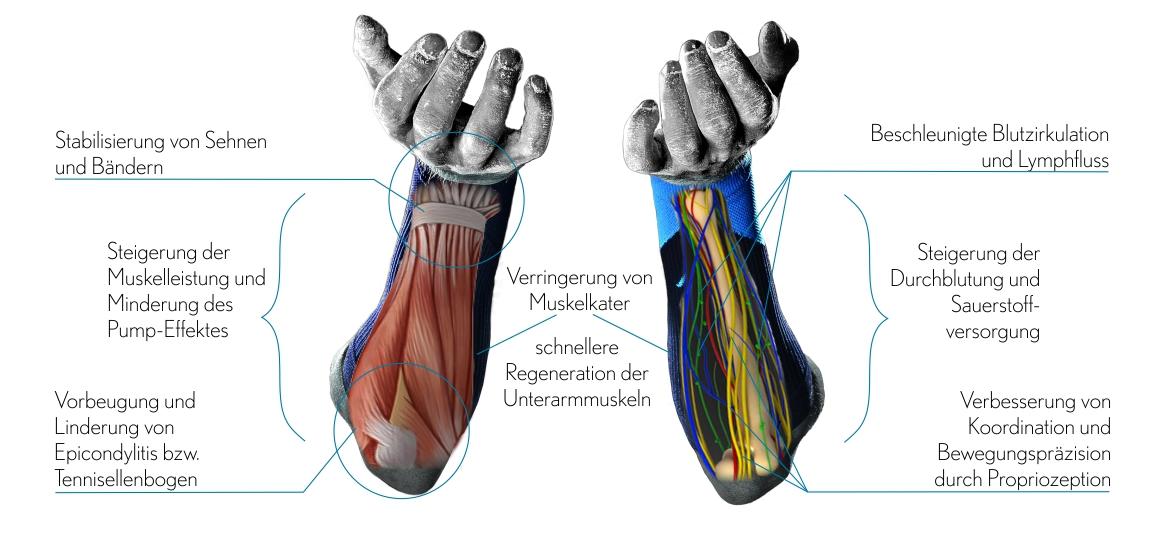 Atemberaubend Handgelenk Bänder Und Sehnen Galerie - Menschliche ...